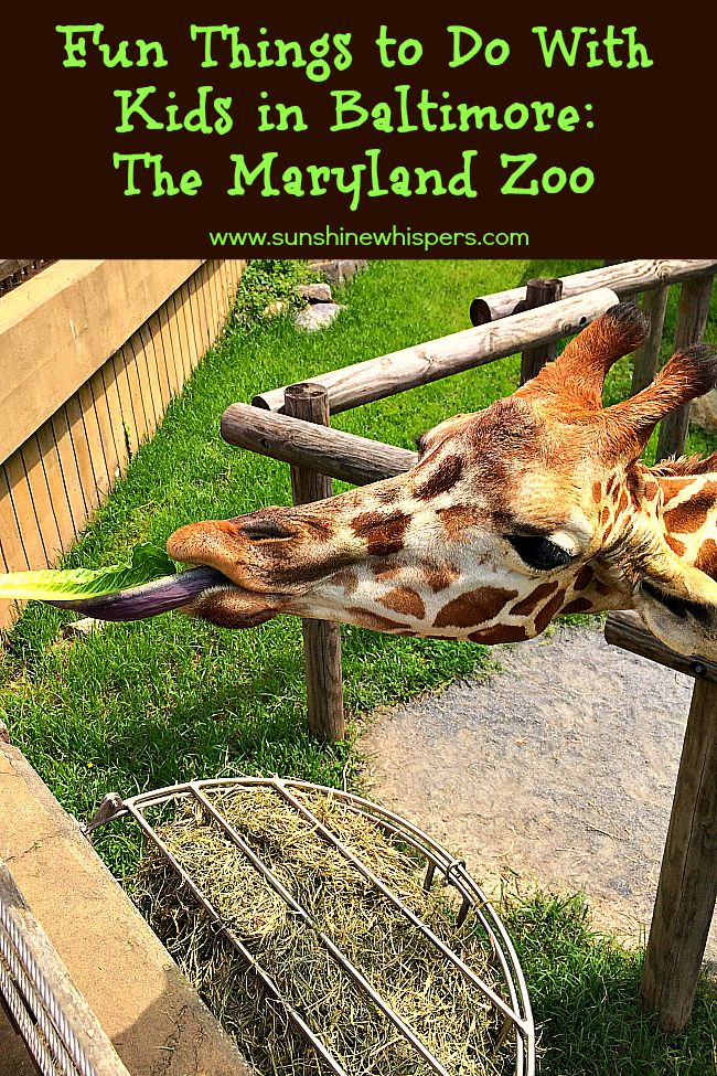 The Mayrland Zoo: Fun Things to Do with Kids in Baltimore