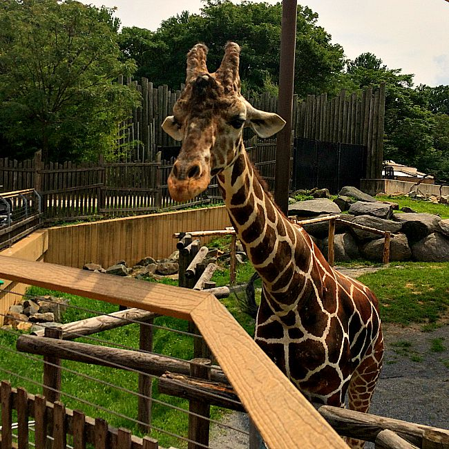 The Maryland Zoo: Fun Things to Do With Kids in Balitmore