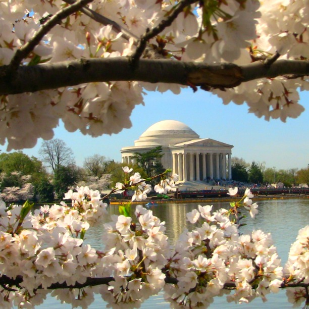 when and where to see flowers in DC