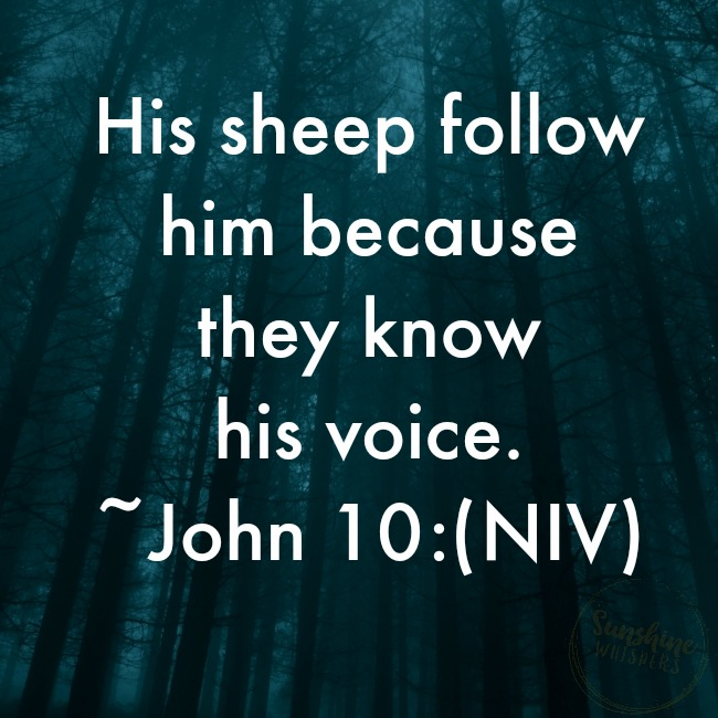 The Value of Knowing the Shepherd's Voice