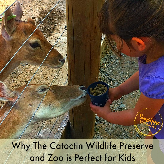 6 Reasons Why the Catoctin Wildlife Preserve and Zoo is Perfect for Kids