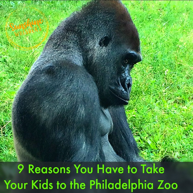 9 Reasons You Have to Take Your Kids to the Philadelphia Zoo