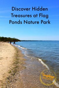 flag ponds nature park