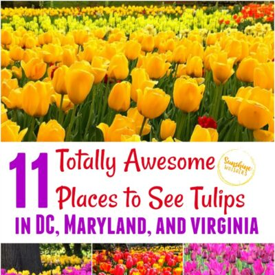 11 Totally Awesome Places to See Tulips in Maryland, DC, and Virginia (updated for 2020)