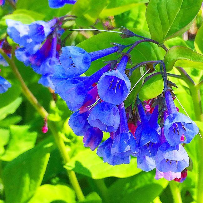 brookside gardens spring