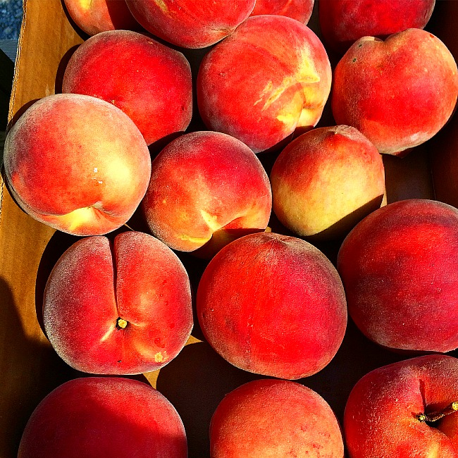 pick your own fruit in maryland