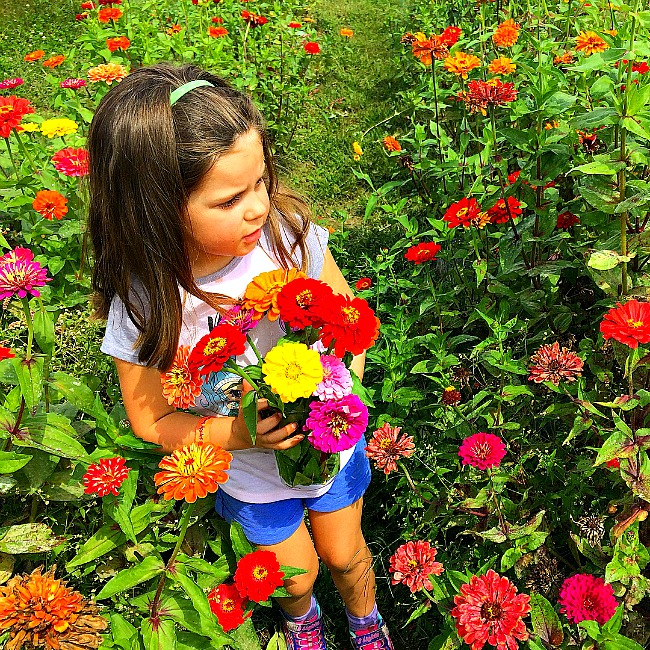flower picking in maryland