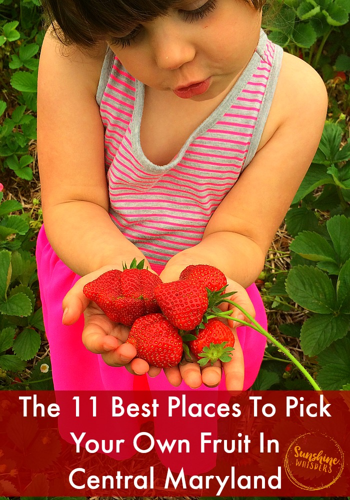 pick your own in maryland