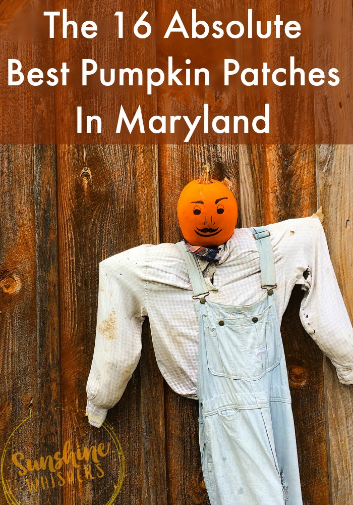 best pumpkin patches in maryland