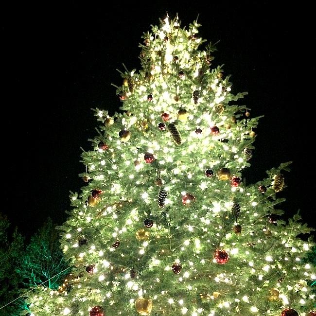 Christmas Lights DC