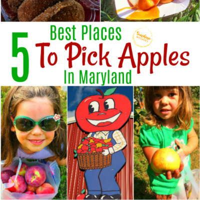 The 5 Best Places To Pick Apples In Maryland