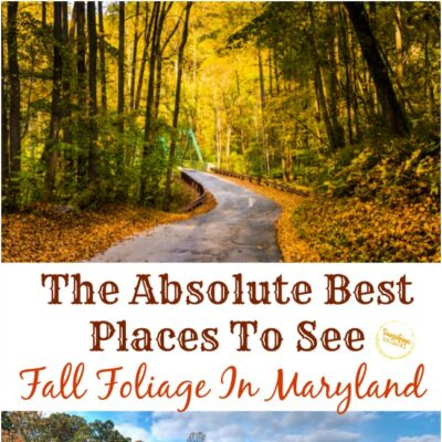 The Absolute Best Places To See Fall Foliage In Maryland