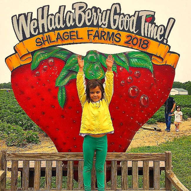 The Sweetest Strawberry Picking In Maryland