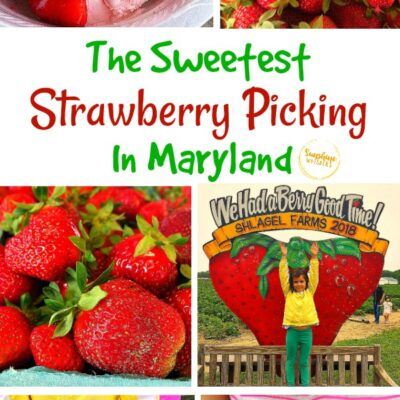 The Sweetest Strawberry Picking In Maryland (updated for 2021)