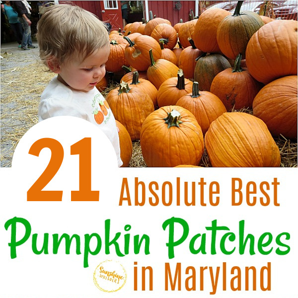 pumpkin patches in maryland